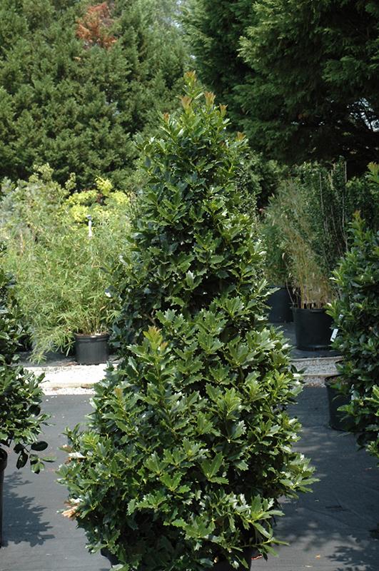 Shade Garden Plants Shrubs